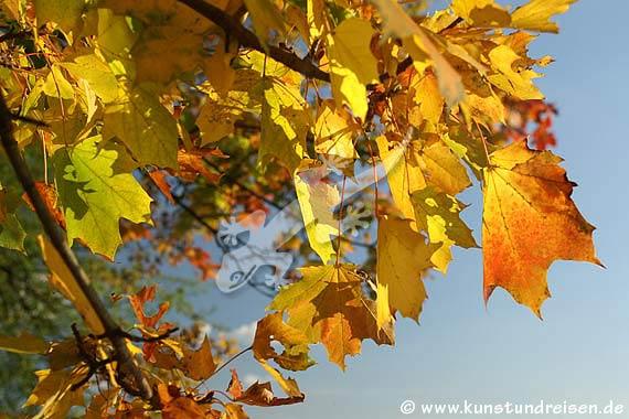 Foto, galleria fotografica: Autunno dorato